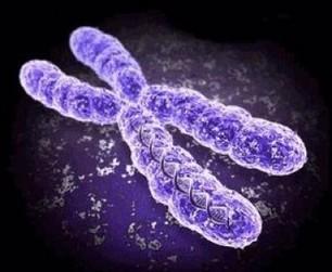 Café et alcool modifieraient la taille des chromosomes | Toxique, soyons vigilant ! | Scoop.it