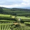 Le commerce du vin, entre mythe et réalité