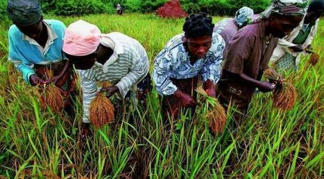 Agriculture. À quoi ressemblent les moissons du futur ? | Questions de développement ... | Scoop.it