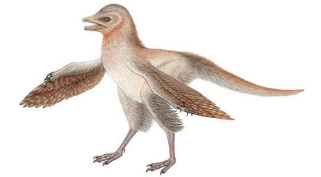 Discovery of 'Bird-Dinosaur' Eosinopteryx Challenges Bird Evolution Theory | Geology | Scoop.it