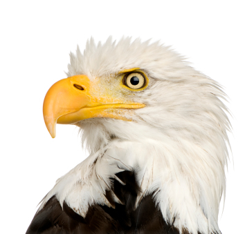Get Your Eagle Eye On: 10 Tips for Proofreading Your Own Work | bloggin' | Scoop.it