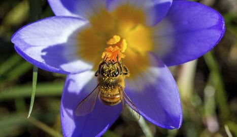 Un pequeño robot inspirado en las abejas para posarse en cualquier lugar | EFEverde | Scoop.it