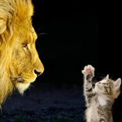 David contre Goliath: Le SEO pour les petites entreprises   Les RP online pour les petites et moyennes entreprises   Scoop.it