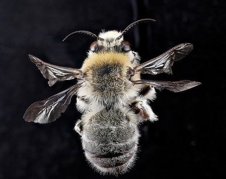 The Buzz on Native Bees | Science Features | Farming, Forests, Water, Fishing and Environment | Scoop.it