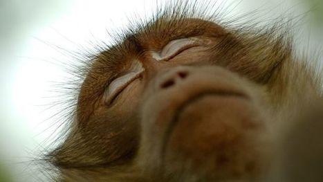 C'est le sommeil qui a fait de nous des hommes intelligents ! | DORMIR…le journal de l'insomnie | Scoop.it