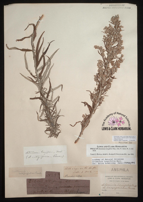 Plant Science Bulletin Volume 49 Issue 4 | Herbaria | Scoop.it