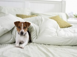 Tips for Selling a Home with Dogs | Nashville TN Real Estate | Scoop.it