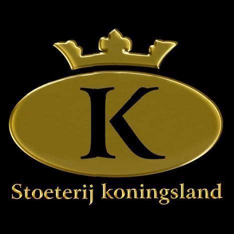 Stoeterij Koningsland - YouTube | Friesian horses | Scoop.it