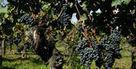 Des pomerols à prix d'ami | Epicure : Vins, gastronomie et belles choses | Scoop.it