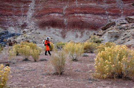 Studiare le piante marziane… sulla Terra | Erba Volant - Applied Plant Science | Scoop.it