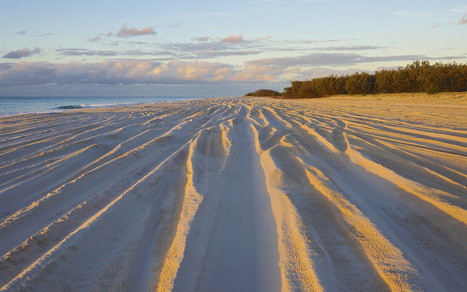 Moreton Island, An Alphabetical Adventure: Q-Z | Garry Rogers Nature Conservation News | Scoop.it