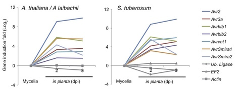 bioRxiv: Arabidopsis late blight: Infection of a nonhost plant by Albugo laibachii enables full colonization by Phytophthora infestans (2015) | Publications | Scoop.it