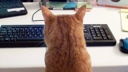 This Is What It's Like To Work From Home With Your Kitty Supurrvisor | Catnip Daily | Scoop.it