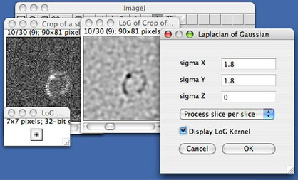 Spot detector based on a 3D LoG filter   image analysis in a plant cell context   Scoop.it