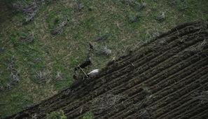 Afrique : l'utilisation des engrais reste minimale | Questions de développement ... | Scoop.it