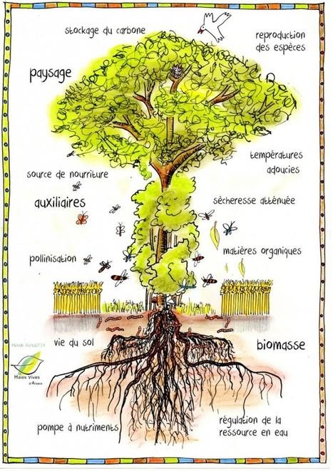 Haies vives d'Alsace   Association de promotion de l'arbre champêtre   Agroécologie   Scoop.it