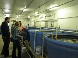 Aquaculture in North Carolina: NC State's Marine Aquaculture Research Center « Southern Fried Science | Aquaculture | Scoop.it
