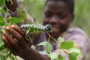 AP News : Worms: A Zimbabwe snack, from tree to dinner table | Elevage non-conventionnel et mini-élevage | Scoop.it