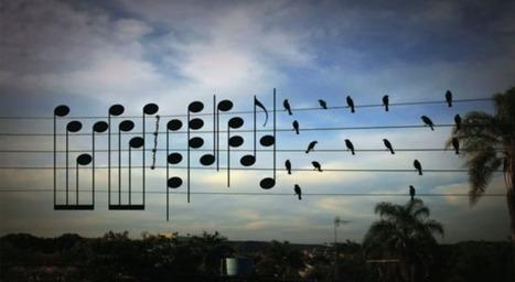 Incroyable mais vrai : la position des oiseaux sur les cables électriques donne une musique de rêve | Ca m'interpelle... | Scoop.it