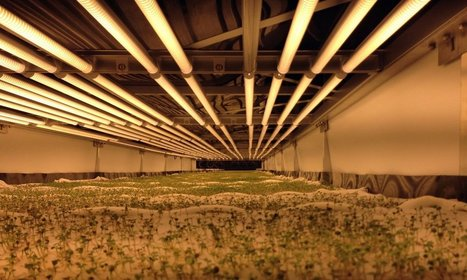 World's Largest Vertical Farm In New Jersey Grows Without Soil, Sunlight Or Water | New inventions | Scoop.it