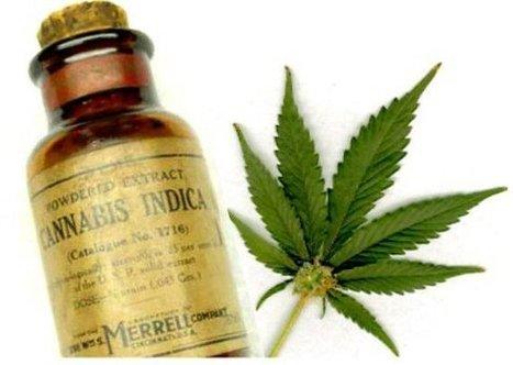 Huile de cannabis en train d'éliminer des cellules cancéreuses!   Science   Scoop.it