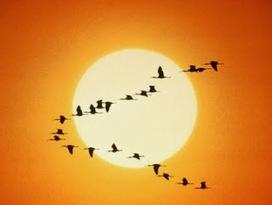 El blog de la Motivación y Superación personal: Todos deberíamos ser un poco patos. Qué crees ? | Neurocoaching & PNL | Scoop.it