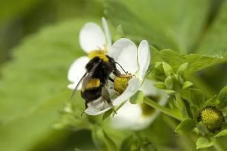 L'entreprise cavaillonnaise qui a mis les insectes dans sa poche | Sven OT | Scoop.it
