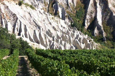 Le Marche Wines | Vinitours | Scoop.it