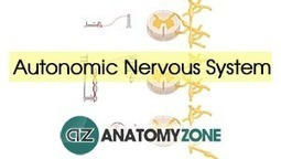 Home • AnatomyZone | #FOAMed resources and other helpful stuff | Scoop.it