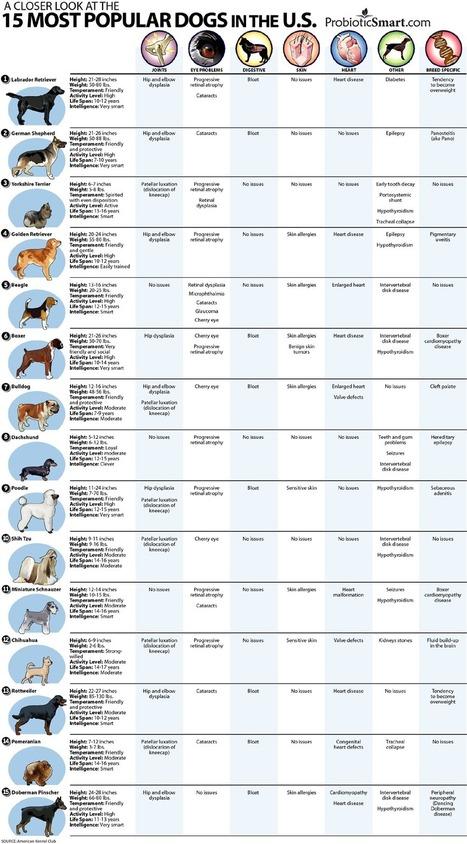 15 raças de cães mais populares nos Estados Unidos | Cinófilia | Scoop.it
