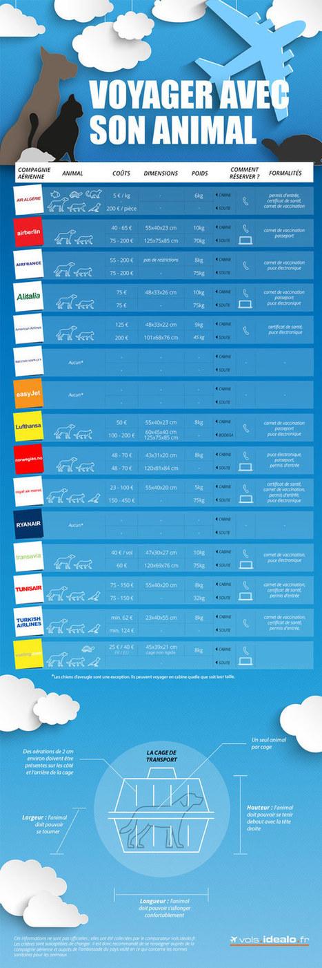 Infographie : Prendre l'avion avec son animal de compagnie | Actu Tourisme | Scoop.it
