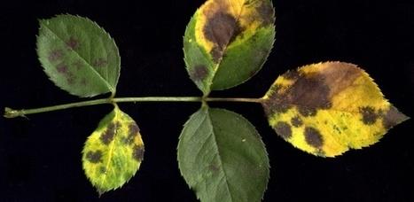 Saiba como proteger suas plantas do ataque de fungos tão comuns no verão   Fungos e Enfermidades   Scoop.it