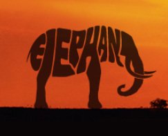 Say 'No!' to ivory. Join the elephant march. | Elephant Facts | Scoop.it