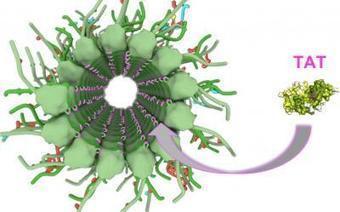 Scientists take totally tubular journey through brain cells | Social Neuroscience Advances | Scoop.it