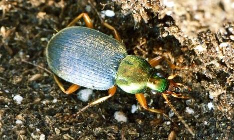 Les néonicotinoïdes voyagent dans la chaîne alimentaire et viennent perturber les équilibres nuisibles-prédateurs...  réduisant ainsi les rendements des cultures de soja !   EntomoNews   Scoop.it