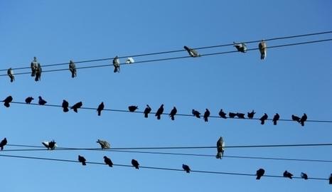 Pourquoi les oiseaux ne s'électrocutent pas sur un fil électrique ?   C@fé des Sciences   Scoop.it