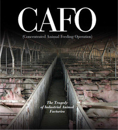 CAFO - The Tragedy of Industrial Animal Factories | Vertical Farm - Food Factory | Scoop.it