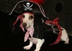Le top des sites web #Pirates classés par Google et les Majors | Internet: Recherche et Sécurité | Scoop.it