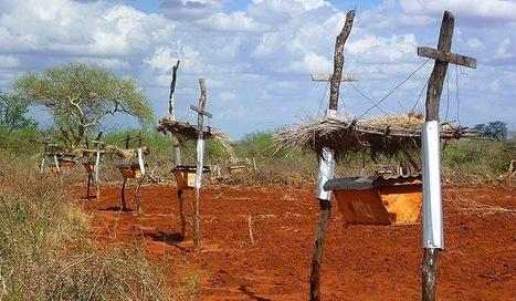 Des ruches pour protéger les éléphants ? Une idée de génie testée au Kénya | Nous avons besoin des abeilles | Scoop.it