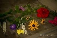 Flirting With Dirt | August herbarium | Herbaria | Scoop.it