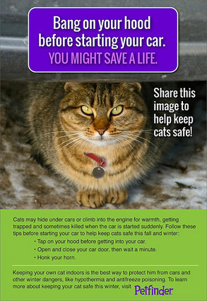 A blog from the dog house...: Check Your Car - You Could Save a Life!! | Pet Sitter Picks | Scoop.it