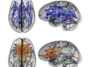 So, men and women's brains are wired differently – but it's not that simple | cool stuff from research | Scoop.it