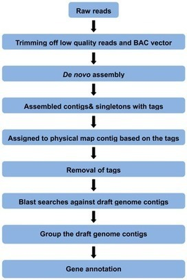 PLOS ONE: Generation of Physical Map Contig-Specific Sequences Useful for Whole Genome Sequence Scaffolding | bioinformatics tools | Scoop.it
