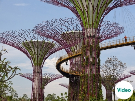 Green Artistry: Gardens By The Bay by Grant Associates | Greener World | Scoop.it