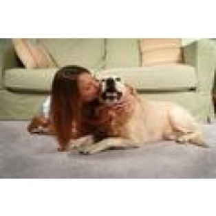 Compare  Carpet Cleaners  for 3 Rooms-Hall Pet Package at Norcross G | Carpet Cleaners Norcross Ga | Scoop.it