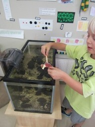 A fish friend inquiry | KC | Early Years Education | Scoop.it