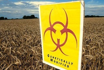 PLS RT DANGEROUS TO HUMANS - GMOs Quietly Pushed For Commercial Growing in The UK - Intellihub.com [and other living creatures] | News You Can Use - NO PINKSLIME | Scoop.it