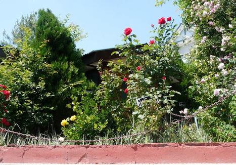 Shimla in Monsoon: Why Rainy Season Is the Best Time to Visit Fagu? | Hotel in Shimla - Snow King Retreat | Scoop.it