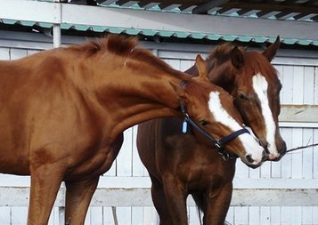 Nature vs. Nurture: What Shapes a Foal's Future? | Cheval | Scoop.it
