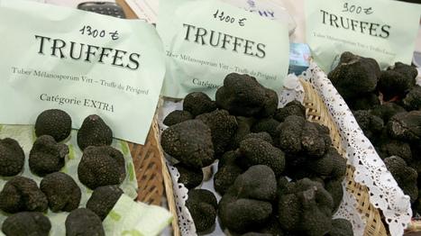 Truffles Take Root In Appalachian Soil : NPR | Local Economy in Action | Scoop.it